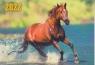 Карманный календарь на 2022 год, Лошадь