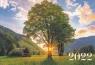 Карманный календарь на 2022 год, Дерево