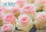 Карманный календарь на 2022 год, Розы