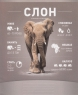 Тетрадь 18 л., кл., цв., Школярик, Арт. 018-1803К, Слон